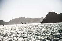 ab921-seagull
