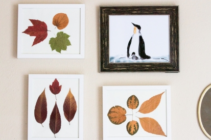 Leaves I had collected last fall that I put to use this year and how. And that penguin is all Murali. He had crudely doodled that Penguin on his iPad long back while watching a documentary on Emperor Penguins. So, I stole it and got it framed. Cool ha?